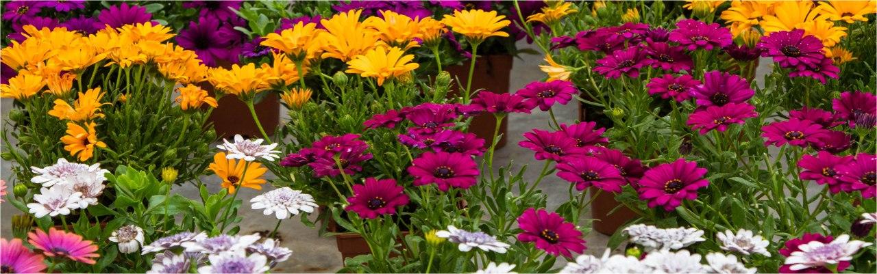 Les 4 saisons du jardin jardinerie a golfech valence d 39 agen - Les quatre saisons du jardinage ...